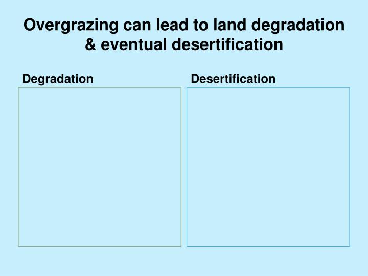 Overgrazing can lead to land degradation & eventual desertification