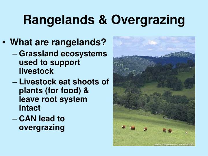 Rangelands & Overgrazing