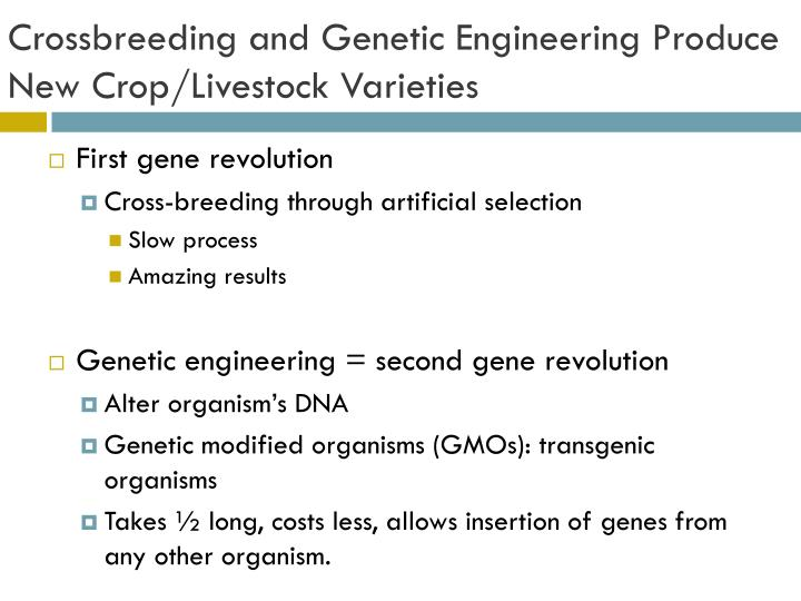Crossbreeding and Genetic Engineering Produce New Crop/Livestock Varieties