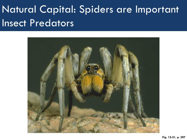 Natural Capital: Spiders are Important Insect Predators