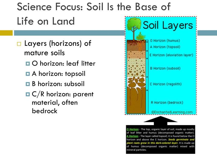 Science Focus: Soil Is the Base of