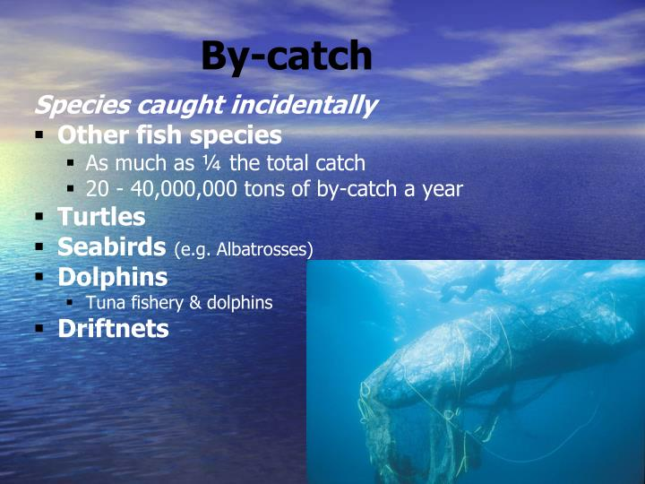 By-catch