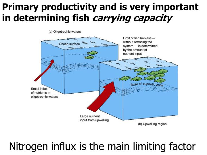 Primary productivity and is very important in determining fish