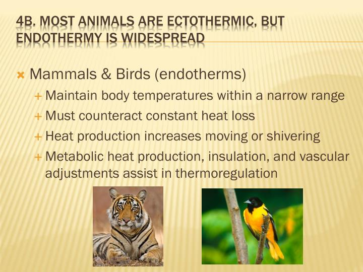Mammals & Birds (endotherms)