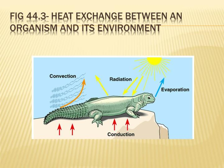 Fig 44.3- Heat exchange between an organism and its environment