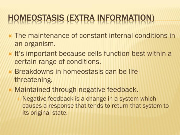 The maintenance of constant internal conditions in an organism.