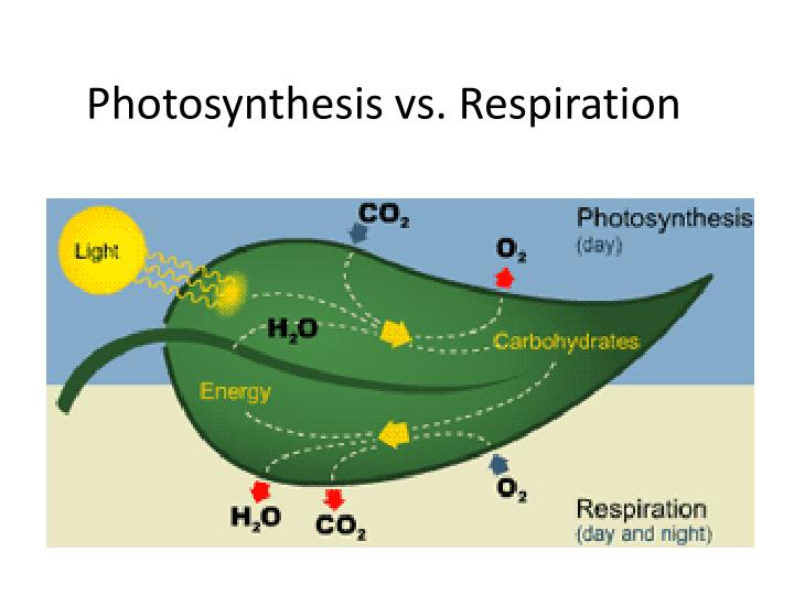 respiration vs photosynthesis So i have moved onto creating a puzzle activity for photosynthesis and cellular respiration i am so excited about this activity because it has two puzzle activities.