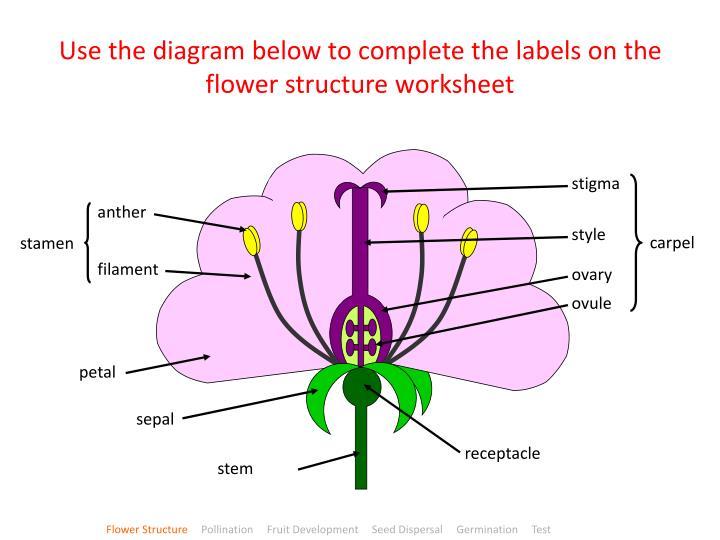PPT - Plant Growth & Development PowerPoint Presentation ...