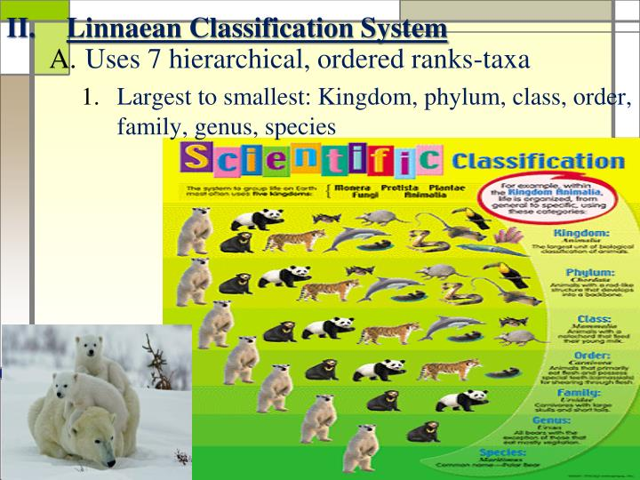 Linnaean Classification System