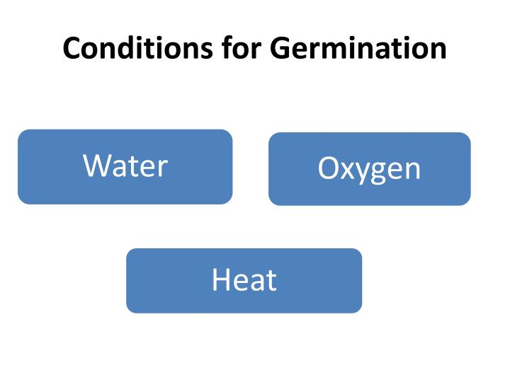 Conditions for germination
