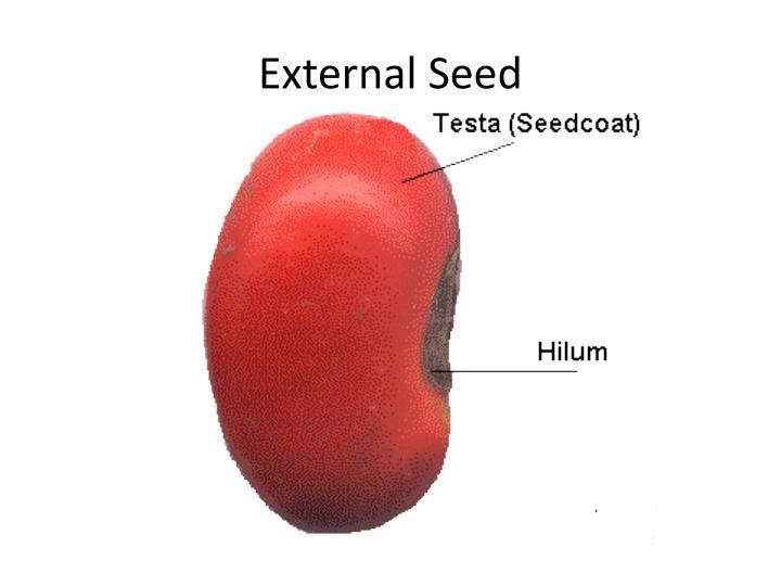 External Seed