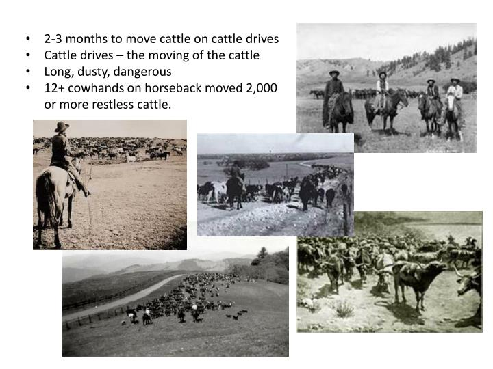 2-3 months to move cattle on cattle drives