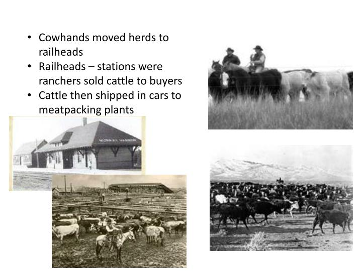 Cowhands moved herds to railheads