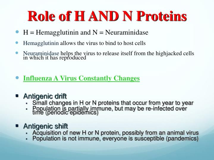 Role of H AND N Proteins