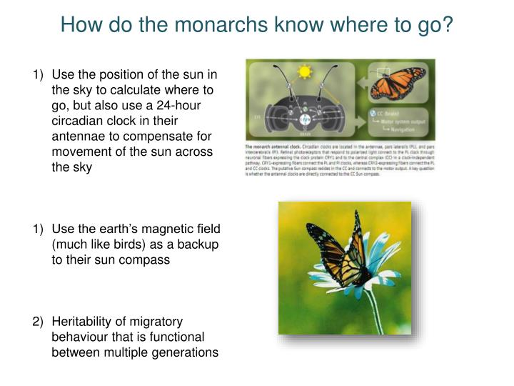 How do the monarchs know where to go?