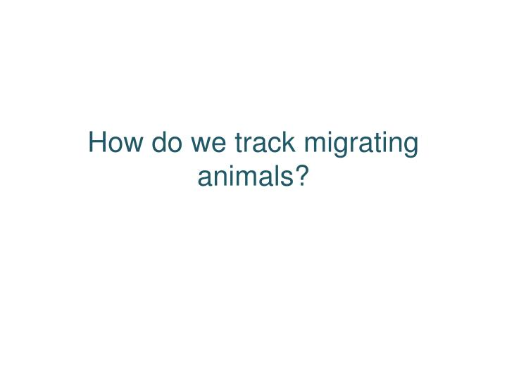How do we track migrating animals?
