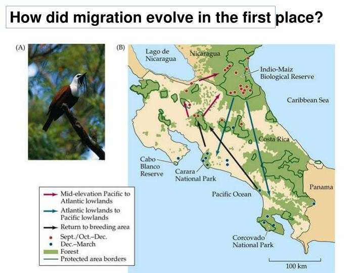How did migration evolve in the first place?