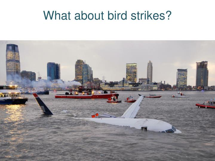 What about bird strikes?