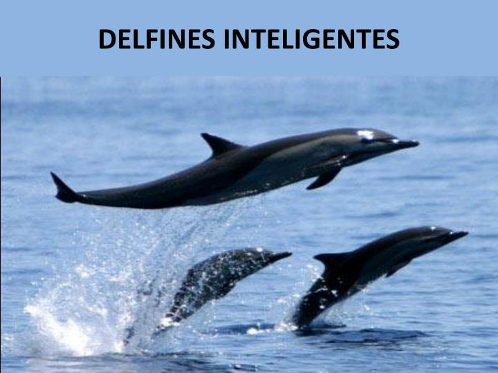 DELFINES INTELIGENTES