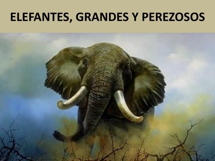 ELEFANTES, GRANDES Y PEREZOSOS
