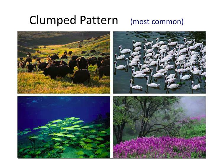 Clumped Pattern