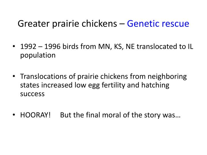 Greater prairie chickens –