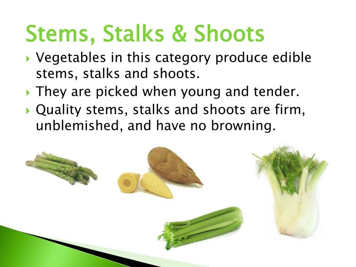 Stems, Stalks & Shoots
