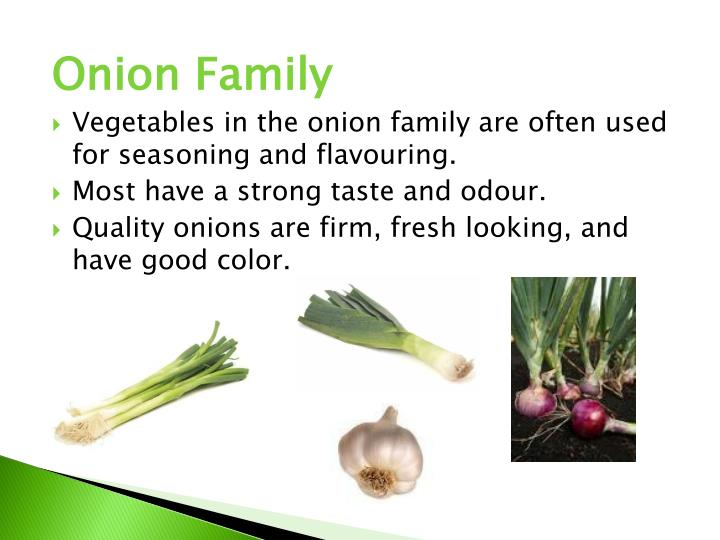 Onion Family