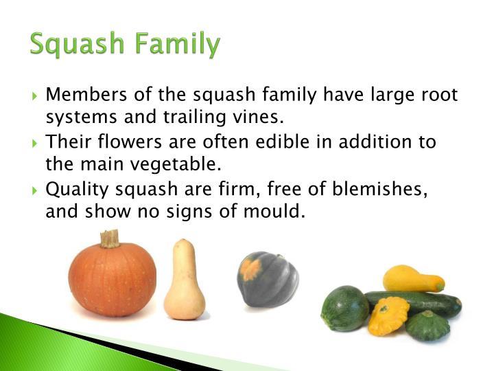 Squash Family