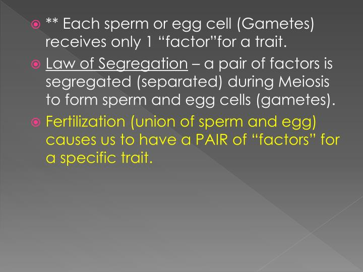 "** Each sperm or egg cell (Gametes) receives only 1 ""factor""for a trait."