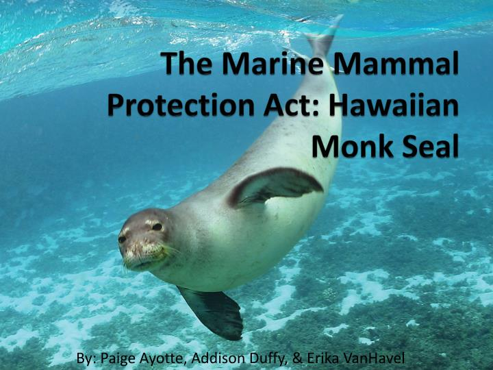 the marine mammal protection act Enacted by congress in october of 1972, the marine mammal protection act (mmpa) is extremely important for the conservation of many marine mammal species.
