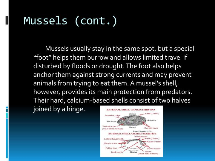 Mussels (cont.)
