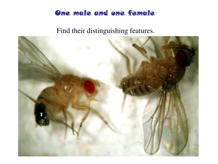 One male and one female