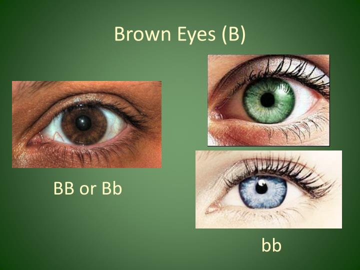 Brown Eyes (B)