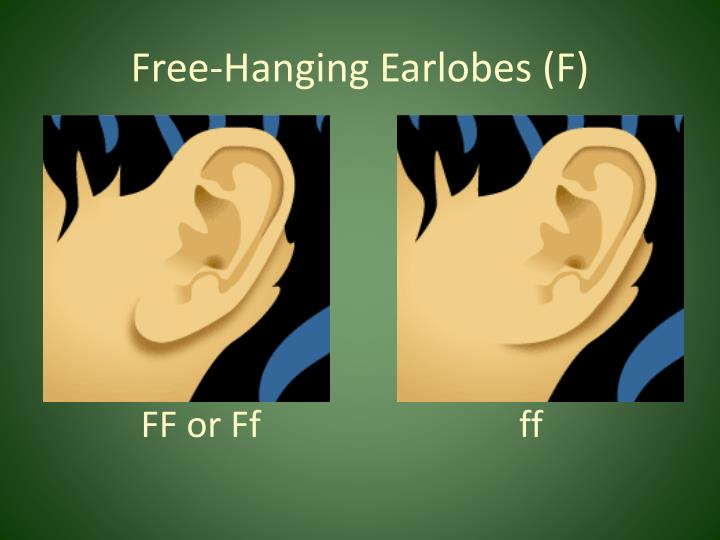 Free-Hanging Earlobes (F)
