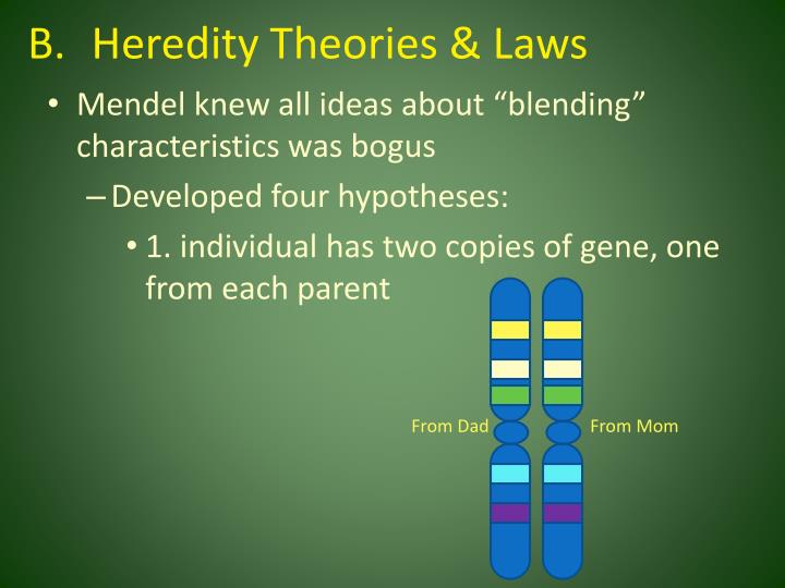 Heredity Theories & Laws