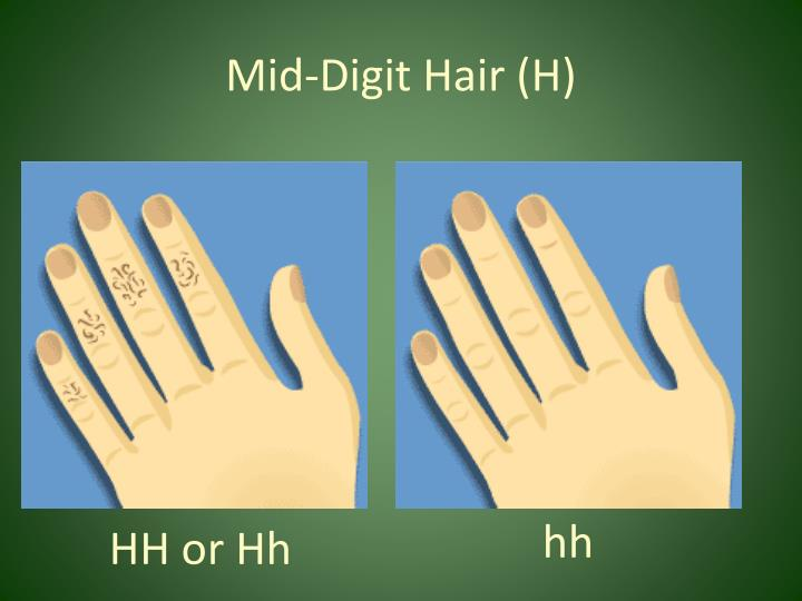 Mid-Digit Hair (H)