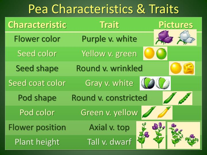Pea Characteristics & Traits