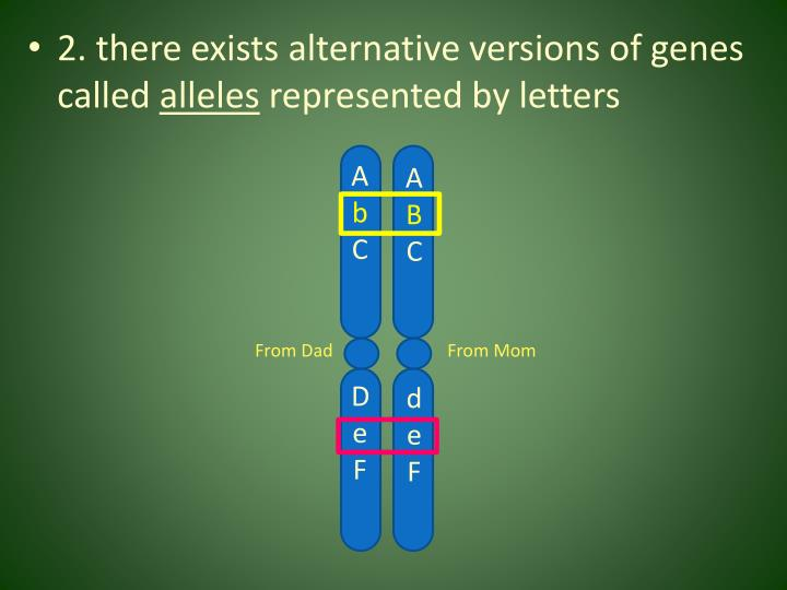 2. there exists alternative versions of genes called