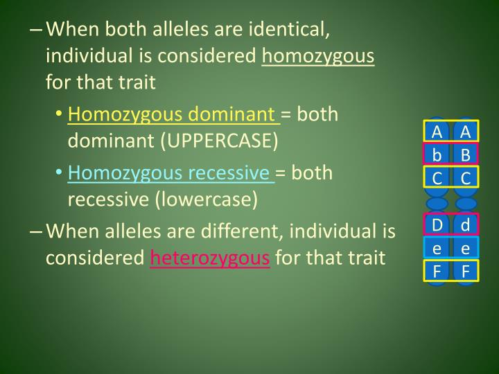 When both alleles are identical, individual is considered