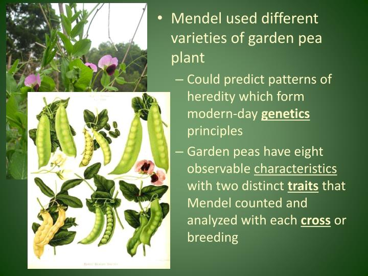 Mendel used different varieties of garden pea plant