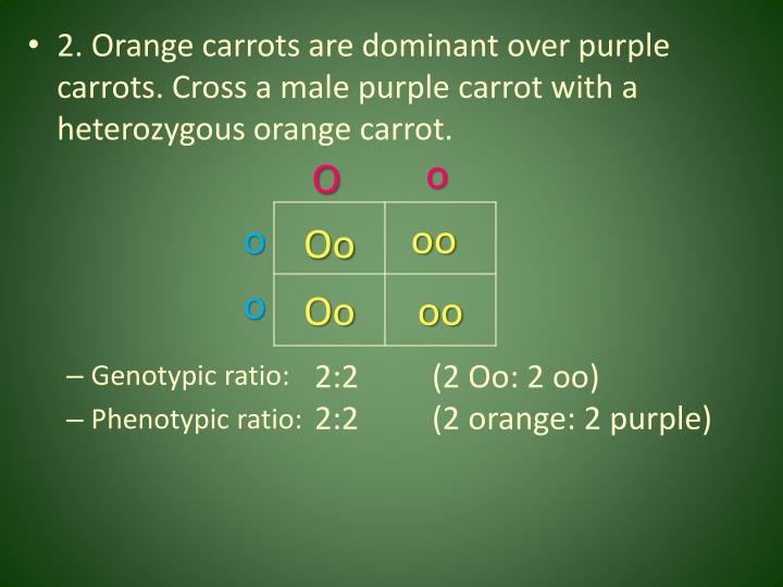 2. Orange carrots are dominant over purple carrots. Cross a male purple carrot with a heterozygous orange carrot.
