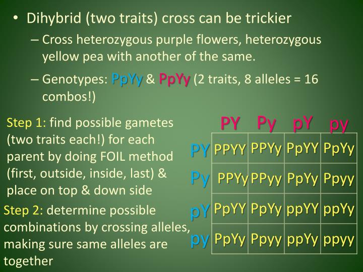 Dihybrid (two traits) cross can be trickier