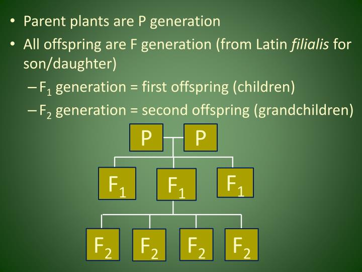 Parent plants are P generation