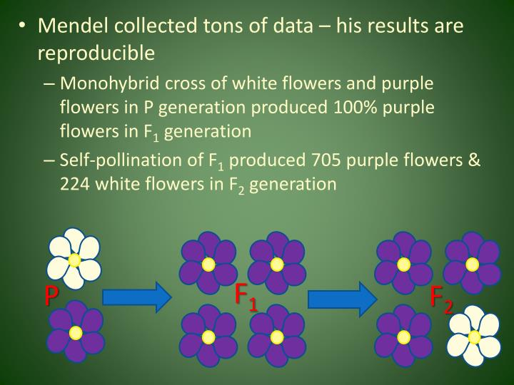 Mendel collected tons of data – his results are reproducible