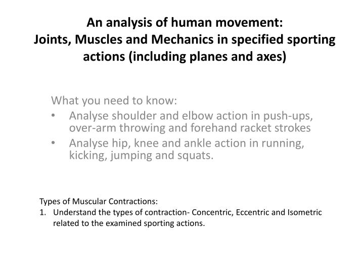 An analysis of human movement: