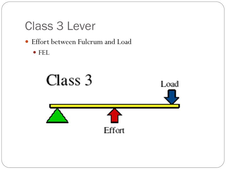 Class 3 Lever