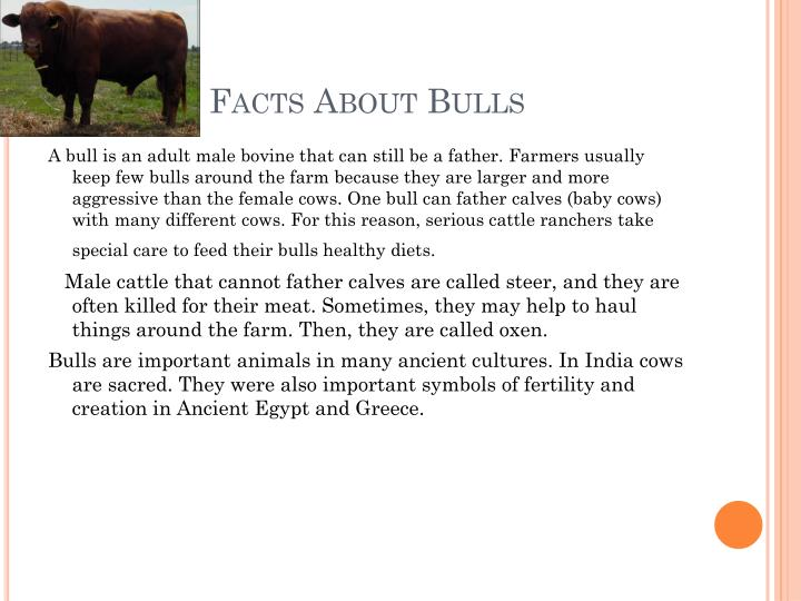 Facts About Bulls