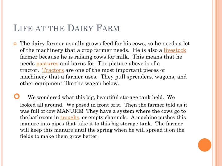 Life at the Dairy Farm