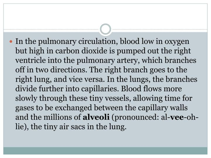 In the pulmonary circulation, blood low in oxygen but high in carbon dioxide is pumped out the right ventricle into the pulmonary artery, which branches off in two directions. The right branch goes to the right lung, and vice versa. In the lungs, the branches divide further into capillaries. Blood flows more slowly through these tiny vessels, allowing time for gases to be exchanged between the capillary walls and the millions of